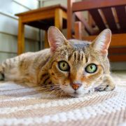 carpet cleaners brisbane